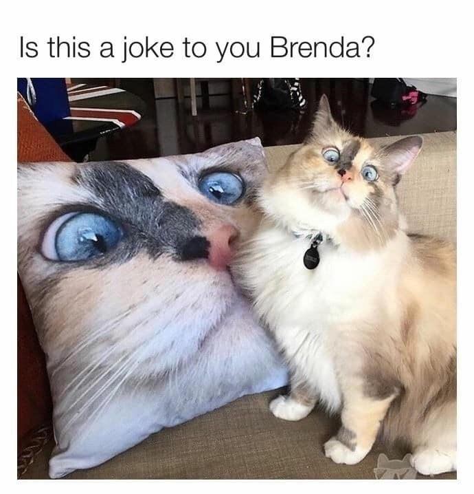meme - Cat - Is this a joke to you Brenda?