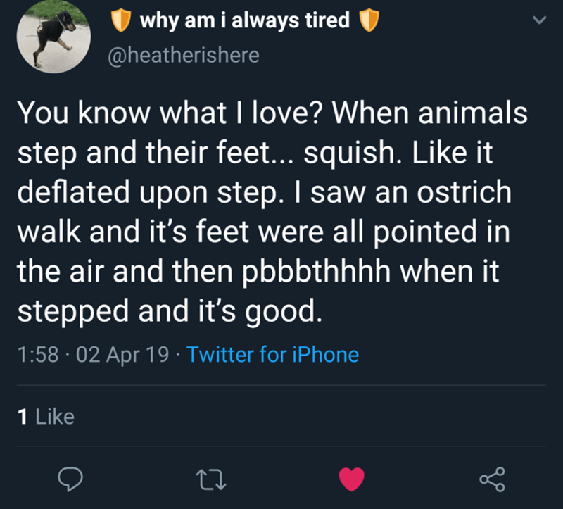 meme - Text - why am i always tired @heatherishere You know what I love? When animals step and their feet... squish. Like it deflated upon step. I saw an ostrich walk and it's feet were all pointed in the air and then pbbbthhhh when it stepped and it's good. 1:58 02 Apr 19 Twitter for iPhone 1 Like