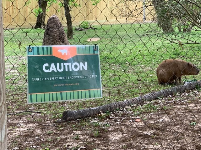 Zoo - CAUTION TAPIRS CAN SPRAY URINE BACKWARDS 7-10 FEET STAY OUT OF THE SPLASH ZONE