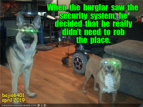 Cheezburger Image 9290413568
