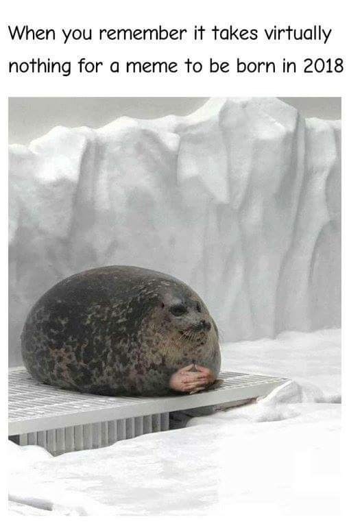 """Caption that reads, """"When you remember it takes virtually nothing for a meme to be born in 2018"""" above a pic of a fat seal photoshopped with hands"""