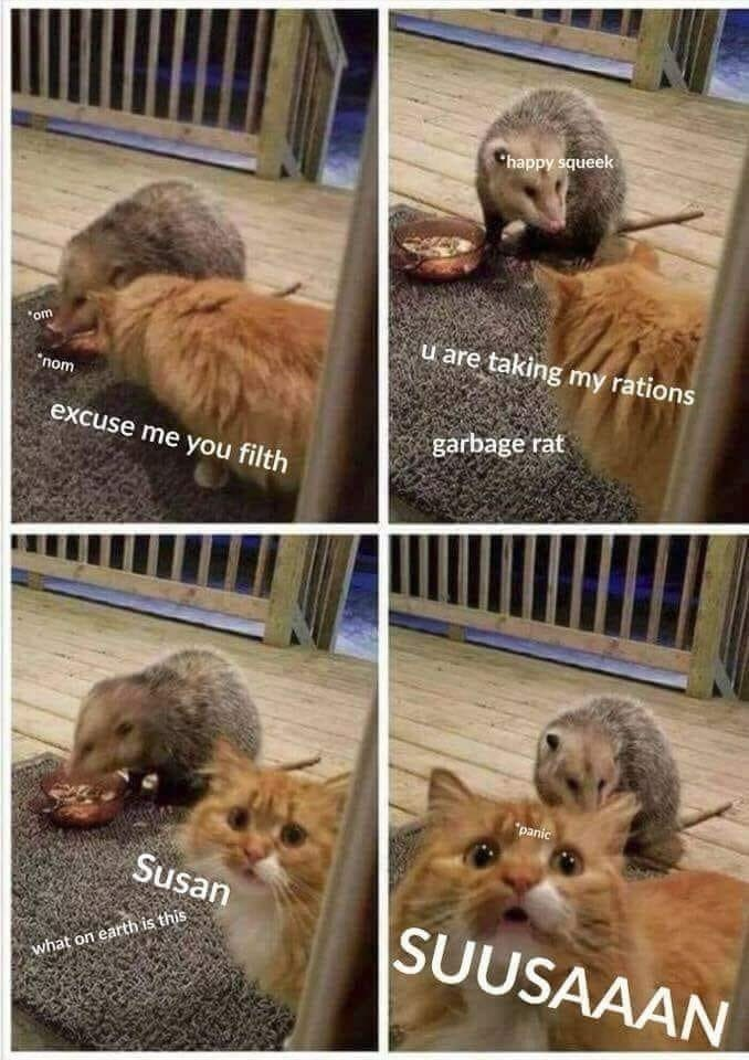 "Pics of a possum stealing a cat's food on the porch; cat yells for ""Susan"""