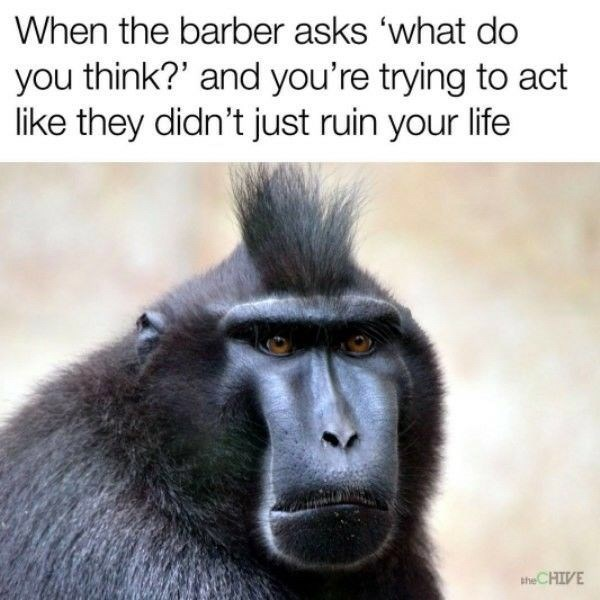 Vertebrate - When the barber asks 'what do you think?' and you're trying to act like they didn't just ruin your life theCHIVE