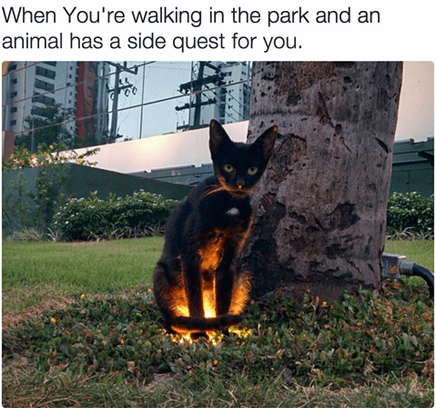 Canidae - When You're walking in the park and an animal has a side quest for you