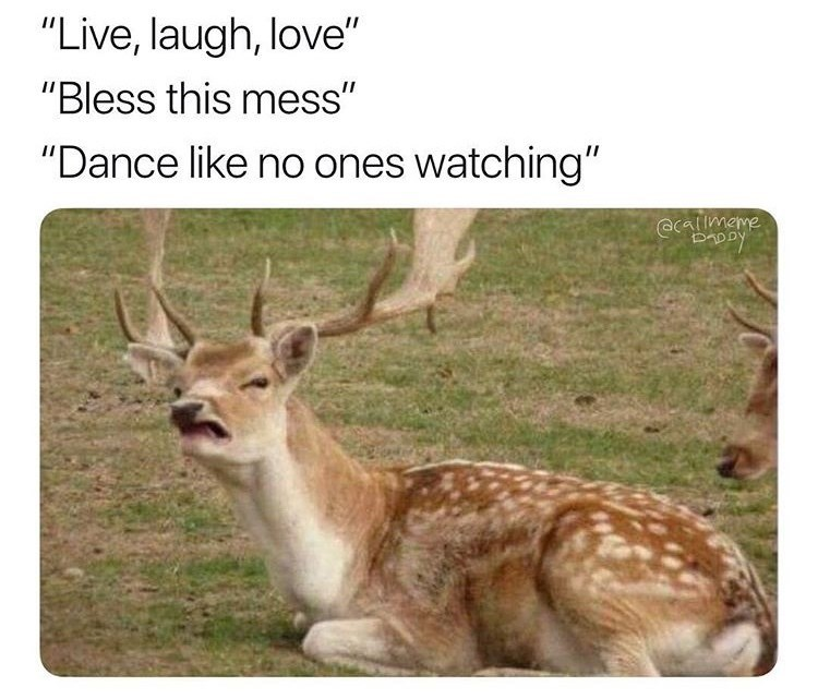 """Wildlife - """"Live, laugh, love"""" """"Bless this mess"""" """"Dance like no ones watching"""" @lmame kaaa"""