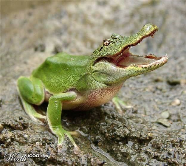 Reptile - ooO