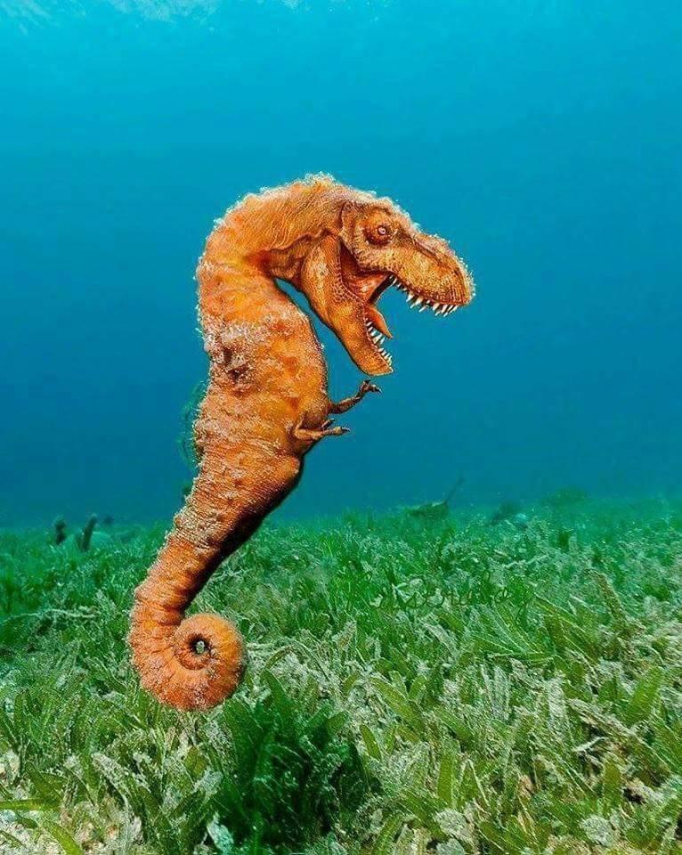 Northern Seahorse