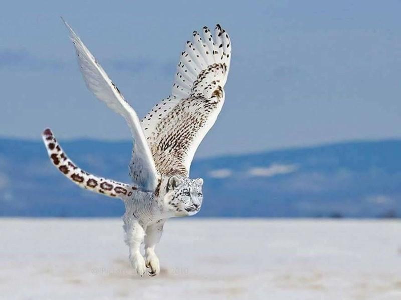 Owl - 2010 Rica