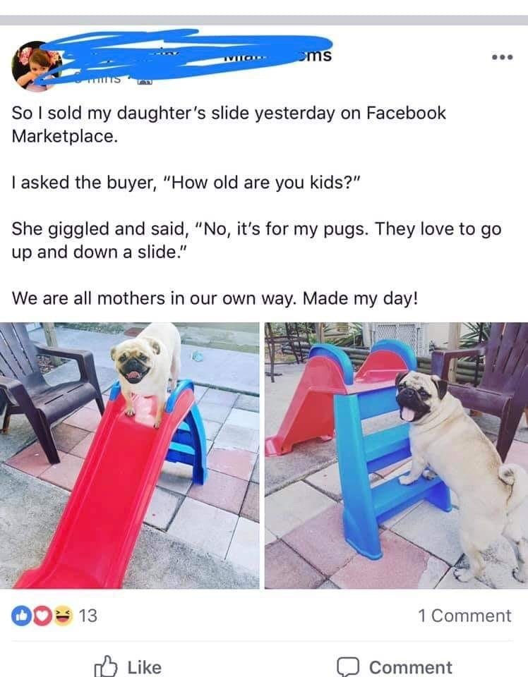 """Product - ms So I sold my daughter's slide yesterday on Facebook Marketplace I asked the buyer, """"How old are you kids?"""" She giggled and said, """"No, it's for my pugs. They love to go up and down a slide."""" We are all mothers in our own way. Made my day! 1 Comment 13 Like Comment"""