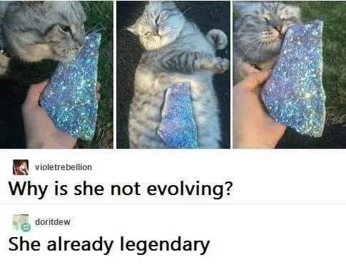 Organism - violetrebellion Why is she not evolving? doritdew already legendary