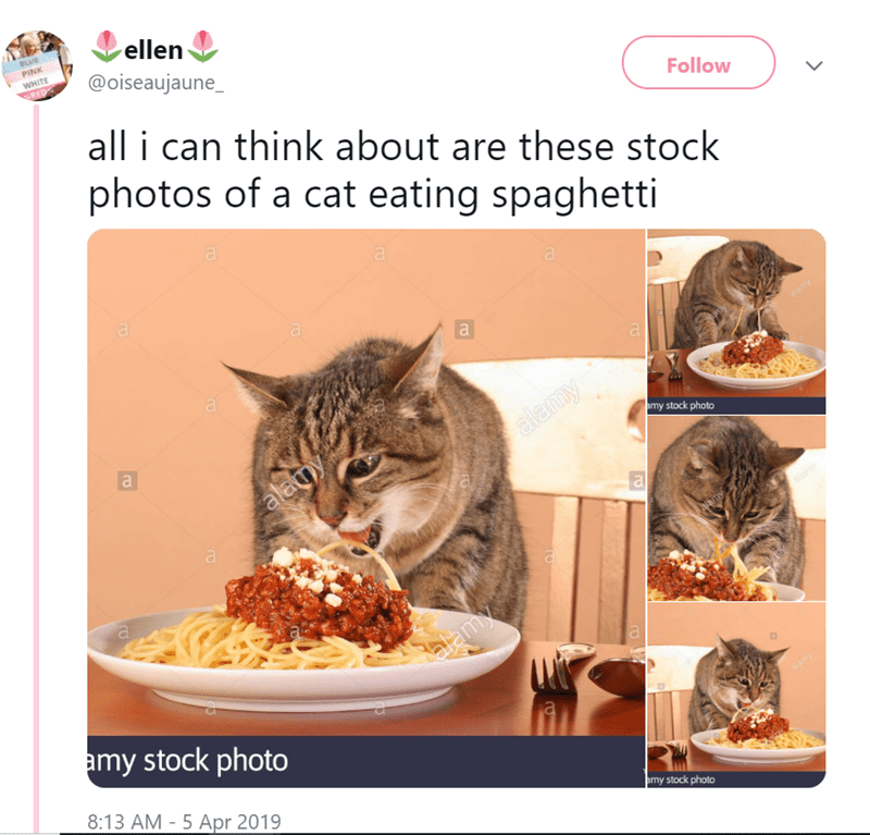 Cat - ellen BLUE PINK WHITE @oiseaujaune_ RED all i can think about are these stock photos of a cat eating spaghetti Follow a a alamy amy stock photo alauy a a alamy amy stock photo lamy 8:13 AM - 5 Apr 2019 amy stock photo