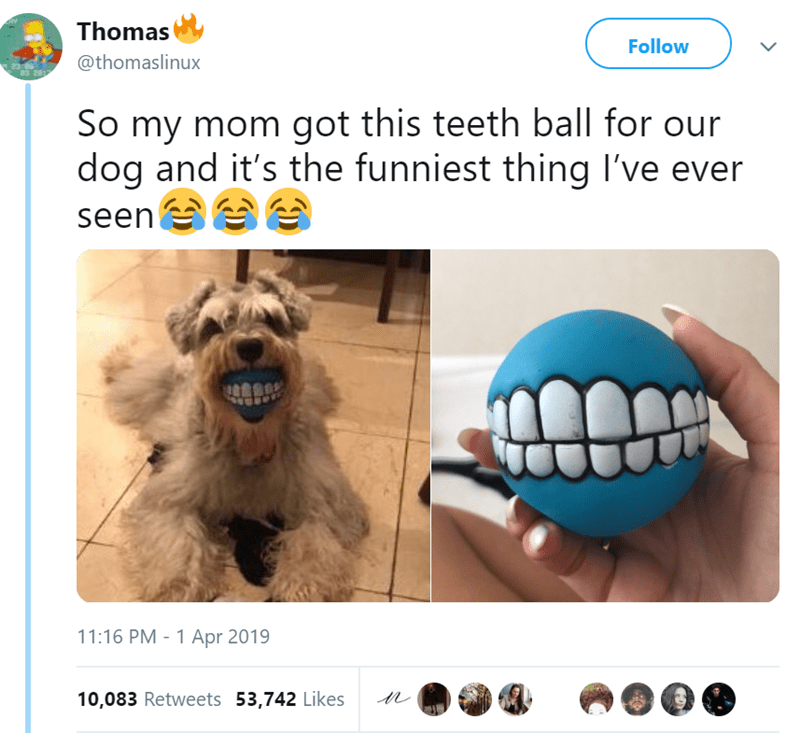 Nose - Thomas Follow @thomaslinux 83 201 So my mom got this teeth ball for our dog and it's the funniest thing I've ever seen 11:16 PM 1 Apr 2019 - 10,083 Retweets 53,742 Likes >