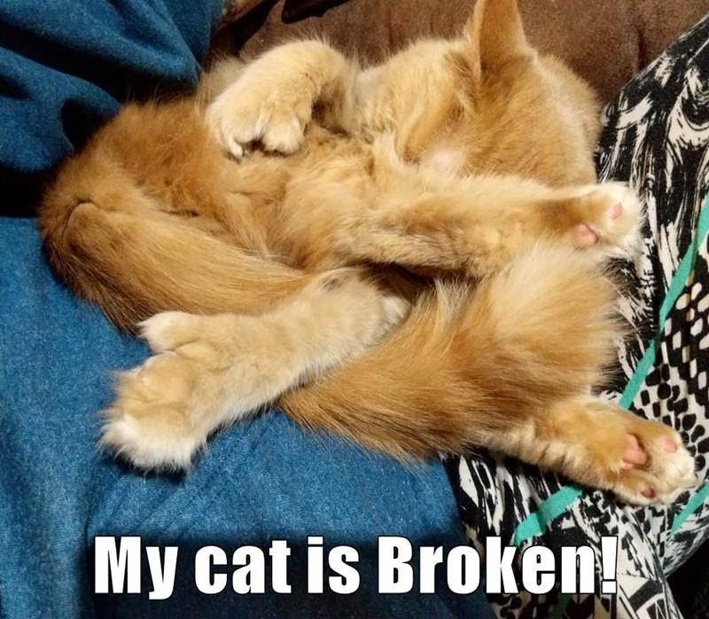 My cat is Broken!
