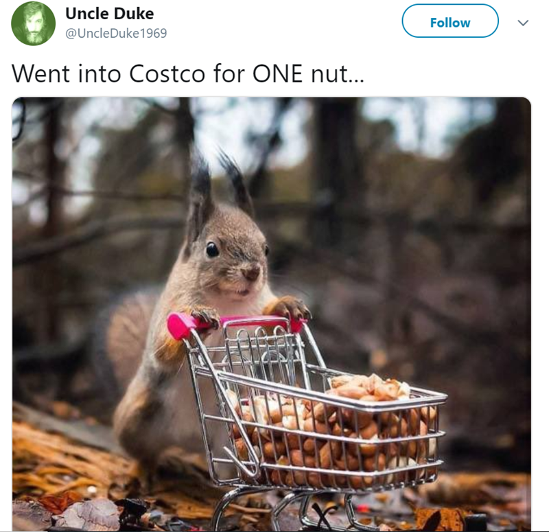 Squirrel - Uncle Duke Follow @UncleDuke 1969 Went into Costco for ONE nut...
