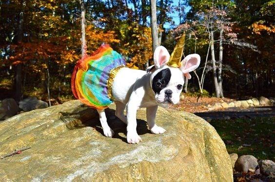 unicorn costume - Dog