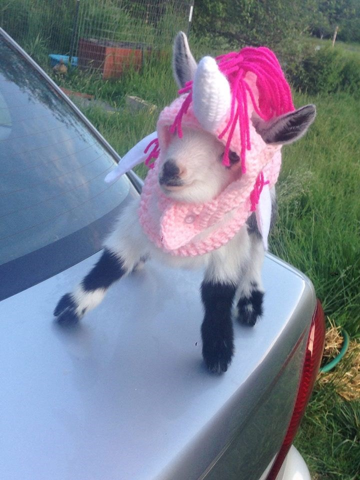 unicorn costume - Goats - AM