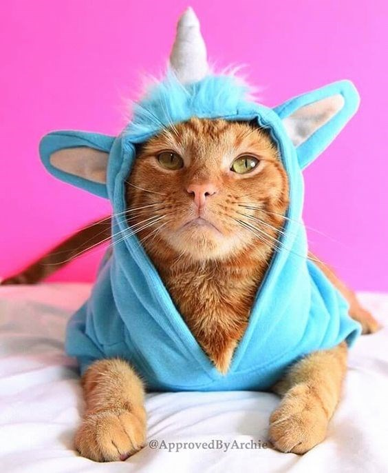 unicorn costume - Cat - @ApprovedByArchie