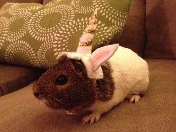 unicorn costume - Rabbit