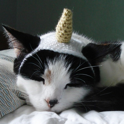 unicorn costume - Cat