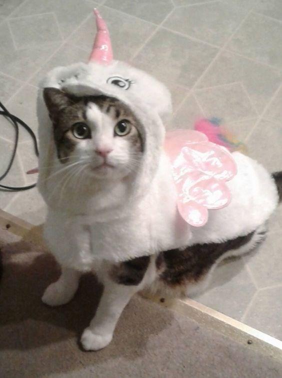 unicorn costume - Cat
