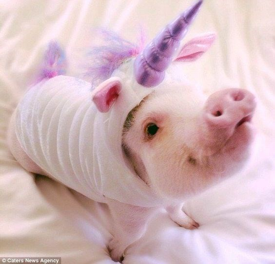 unicorn costume - Pink - © Caters News Agency