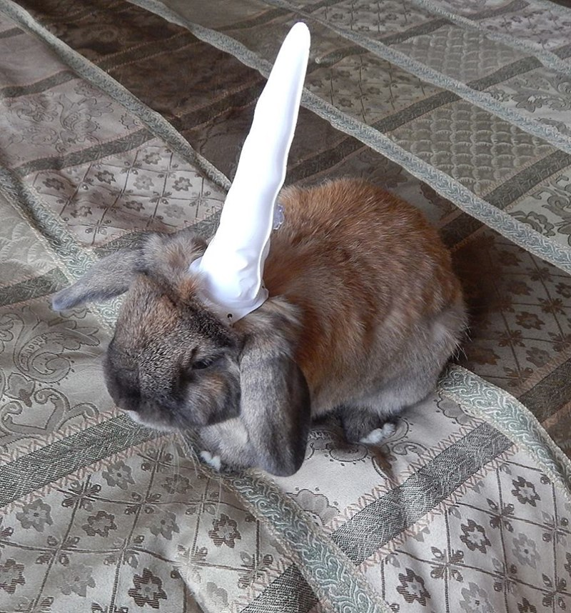 unicorn costume - Domestic rabbit - WAVAVAYNVMM Xww.wwNANN