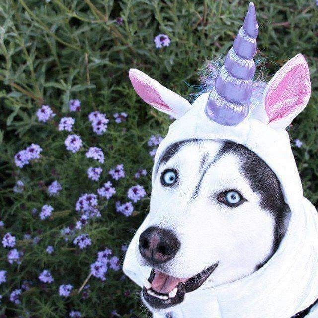 unicorn costume - Dog
