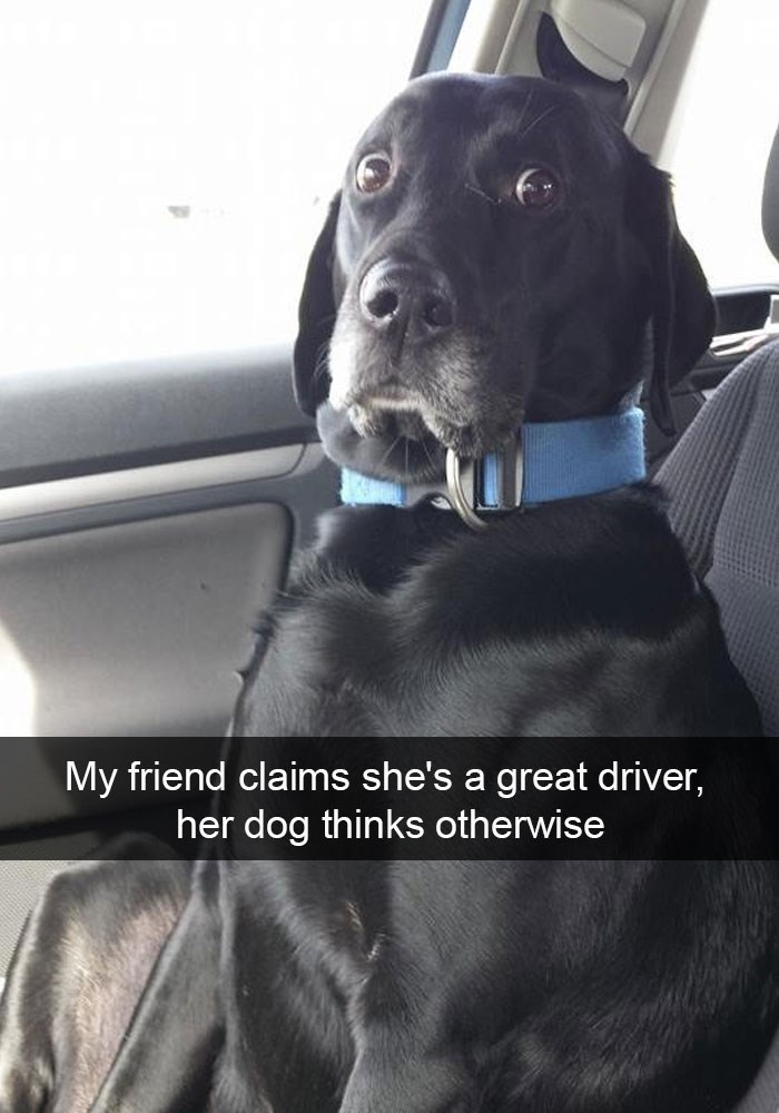 Dog - My friend claims she's a great driver, her dog thinks otherwise