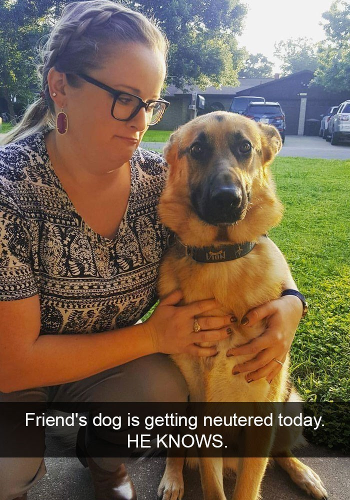 Dog - VON Friend's dog is getting neutered today. HE KNOWS.