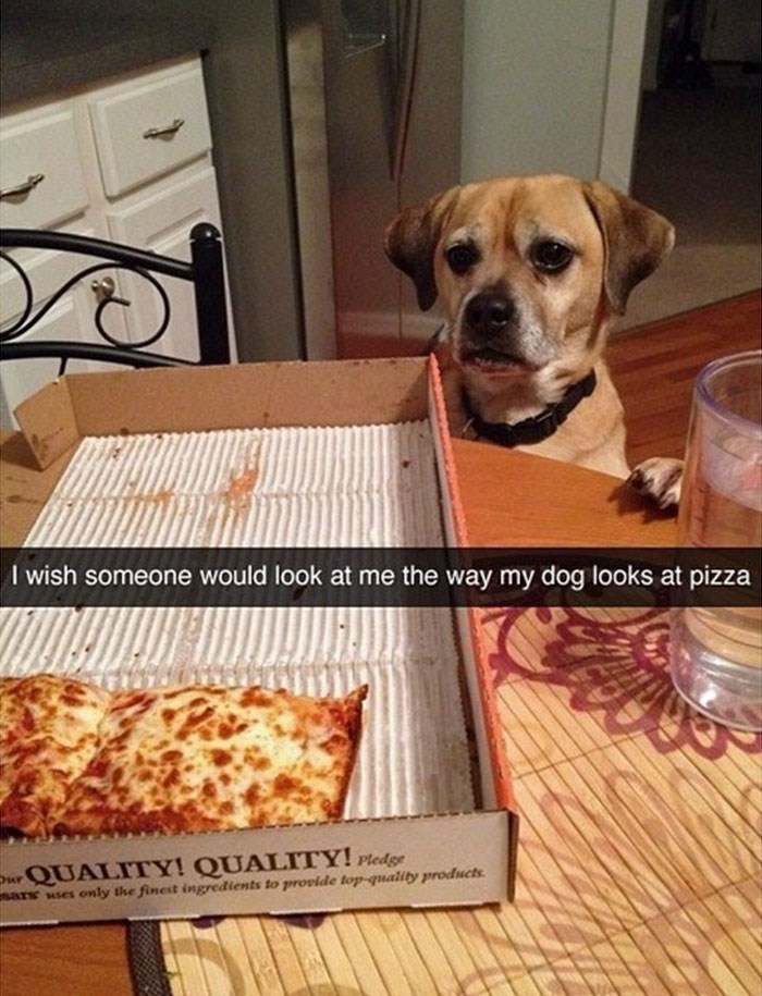 Dog - I wish someone would look at me the way my dog looks at pizza Dur QUALITY! QUALITY! Pledge only the finest ingredients to provide top-quality products sars uses