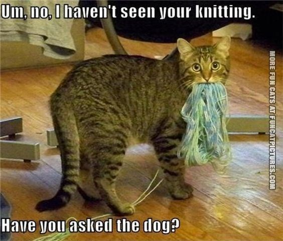Cat - Um, no, I haven't seen your knitting. Have you aslked the dog? MORE FUN CATS AT FUNCATPICTURES.COM