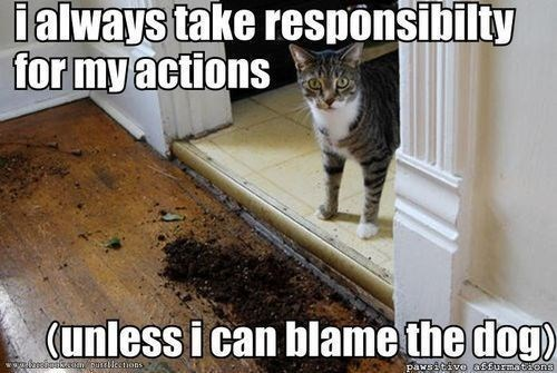 Cat - lalways take responsibilty for my actions (unless i can blame the dog w ssinasain ouclestions pawsitive affurmaton