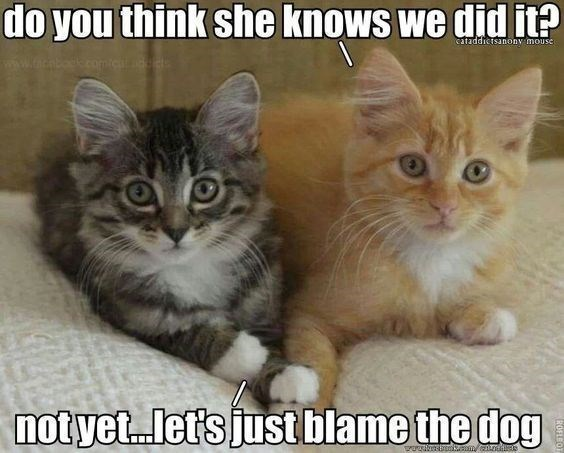 Cat - do you think she knows we did it? cataddictsanony mouse ww.acabodk.comic notyet.let's just blame the dog