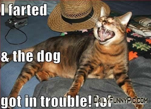 Cat - I farted & the dog got in trouble!ofNYICO FUNN