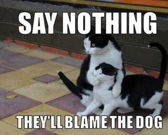 Cat - SAY NOTHING THEY'LL BLAMETHE DOG