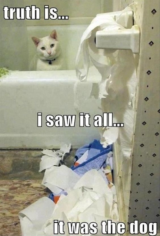 Cat - truth is... i saw it all.. it was the dog