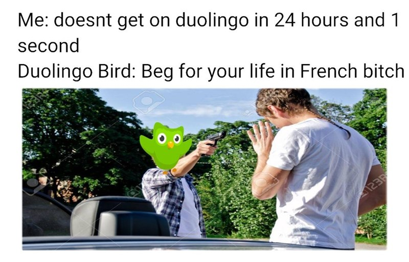 Adaptation - Me: doesnt get on duolingo in 24 hours and 1 second Duolingo Bird: Beg for your life in French bitch