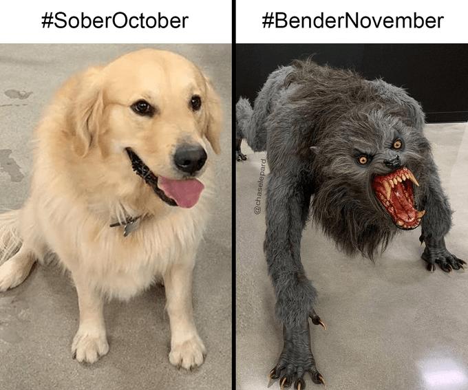 Dog - #SoberOctober #BenderNovember @chaselepard