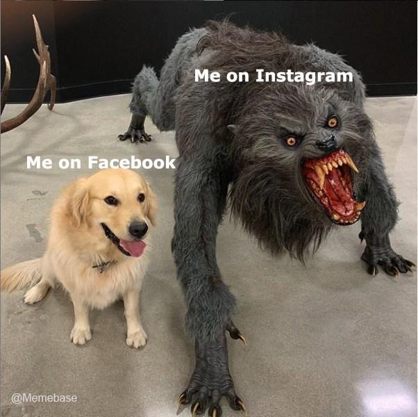 Dog - Me on Instagram Me on Facebook @Memebase