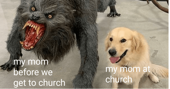 Dog breed - my mom before we my mom at church get to church