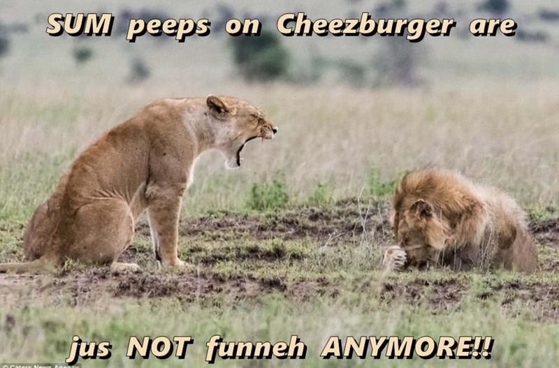 Cheezburger Image 9291613952