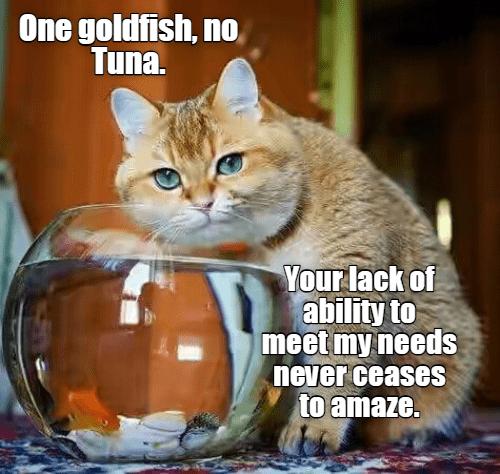 tuna cat memes - 9291939840