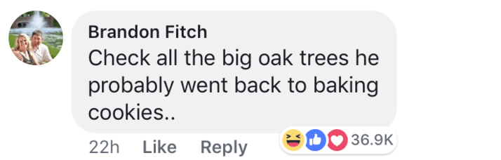 short joke - Text - Brandon Fitch Check all the big oak trees he probably went back to baking cookies.. SOO36.9K Like Reply 22h