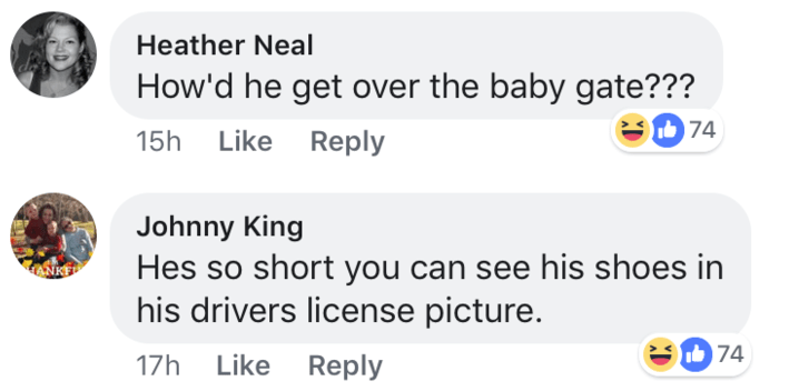 short joke - Text - Heather Neal How'd he get over the baby gate??? e74 15h Like Reply Johnny King Hes so short you can see his shoes in his drivers license picture. 74 17h Like Reply