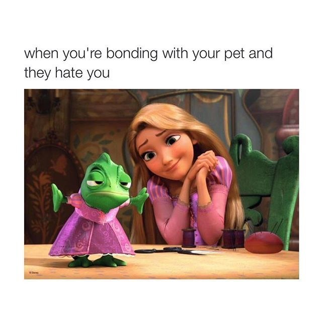 Cartoon - when you're bonding with your pet and they hate you