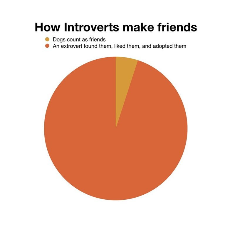Orange - How Introverts make friends Dogs count as friends An extrovert found them, liked them, and adopted them