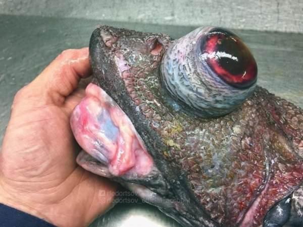 deep sea - Flesh - Dedortso edortsov diat aceonit