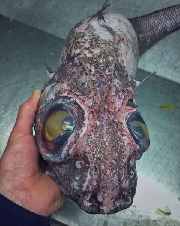 deep sea - Fish