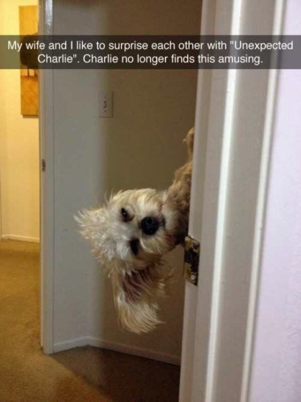 "Dog - My wife and I like to surprise each other with ""Unexpected Charlie"". Charlie no longer finds this amusing."