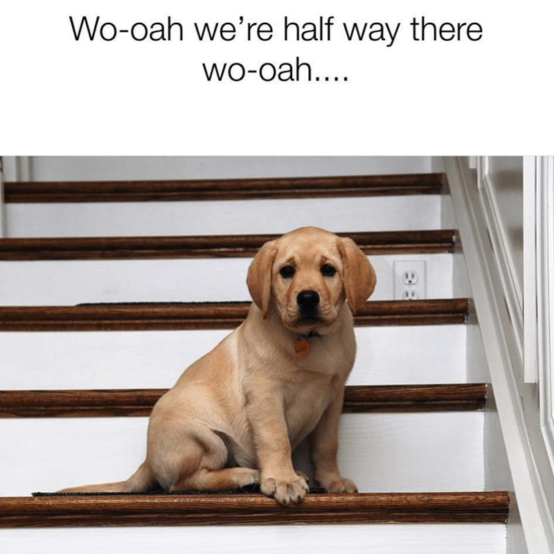 Dog - Wo-oah we're half way there wo-oah..